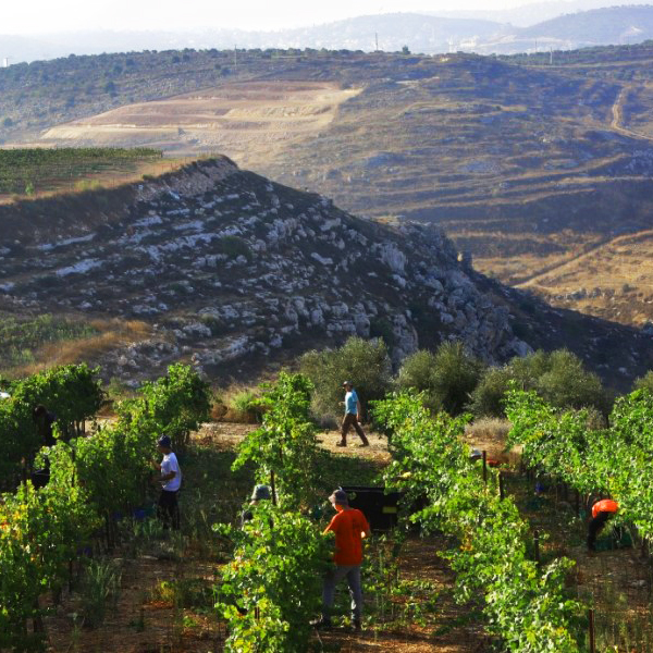 Israel winery tour