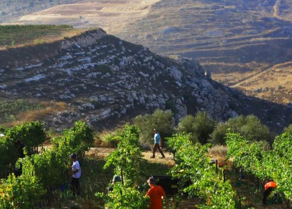 wine-tours-israel
