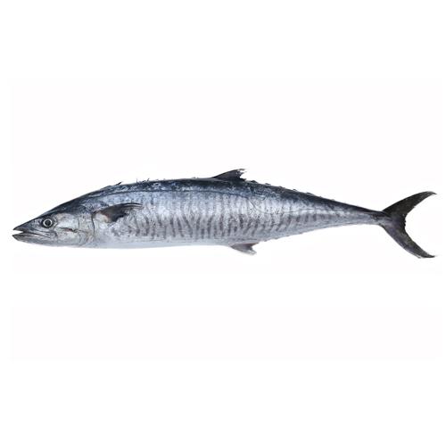 narrow-strip-mackerel