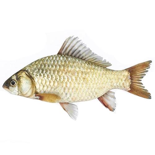 sea-carp