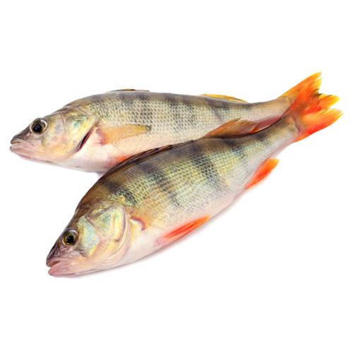 striped-crucian-carp