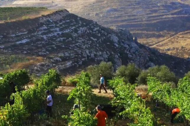 Винный тур в Израиле