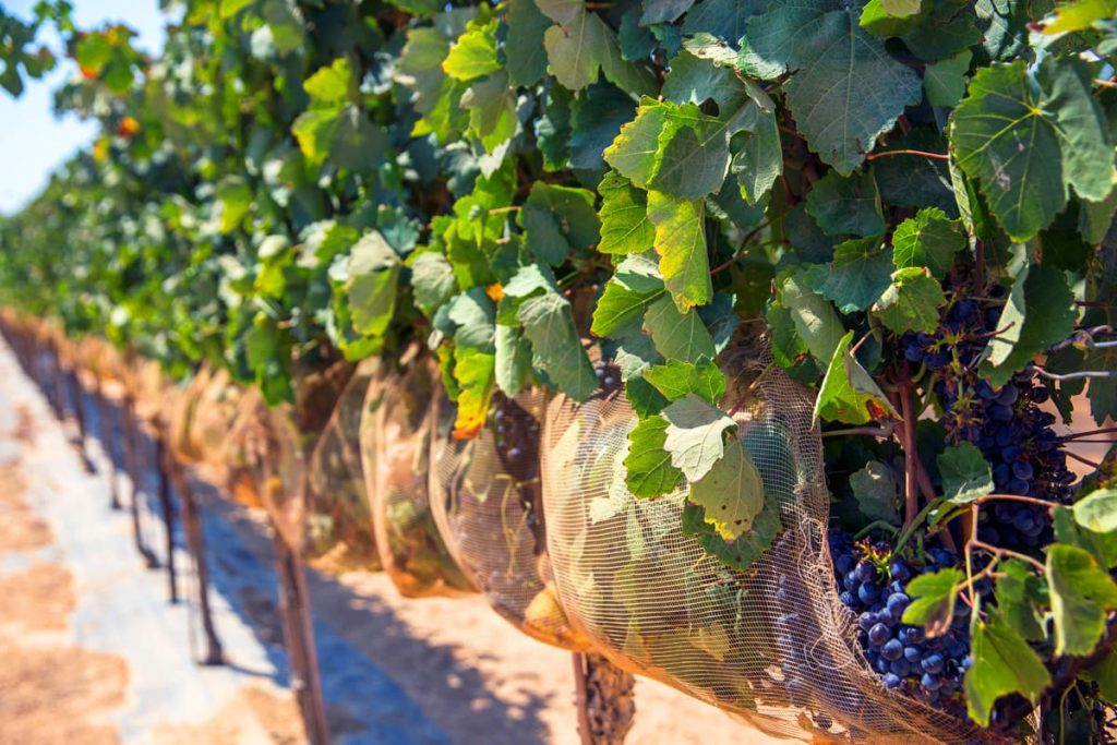 negev-wine-route